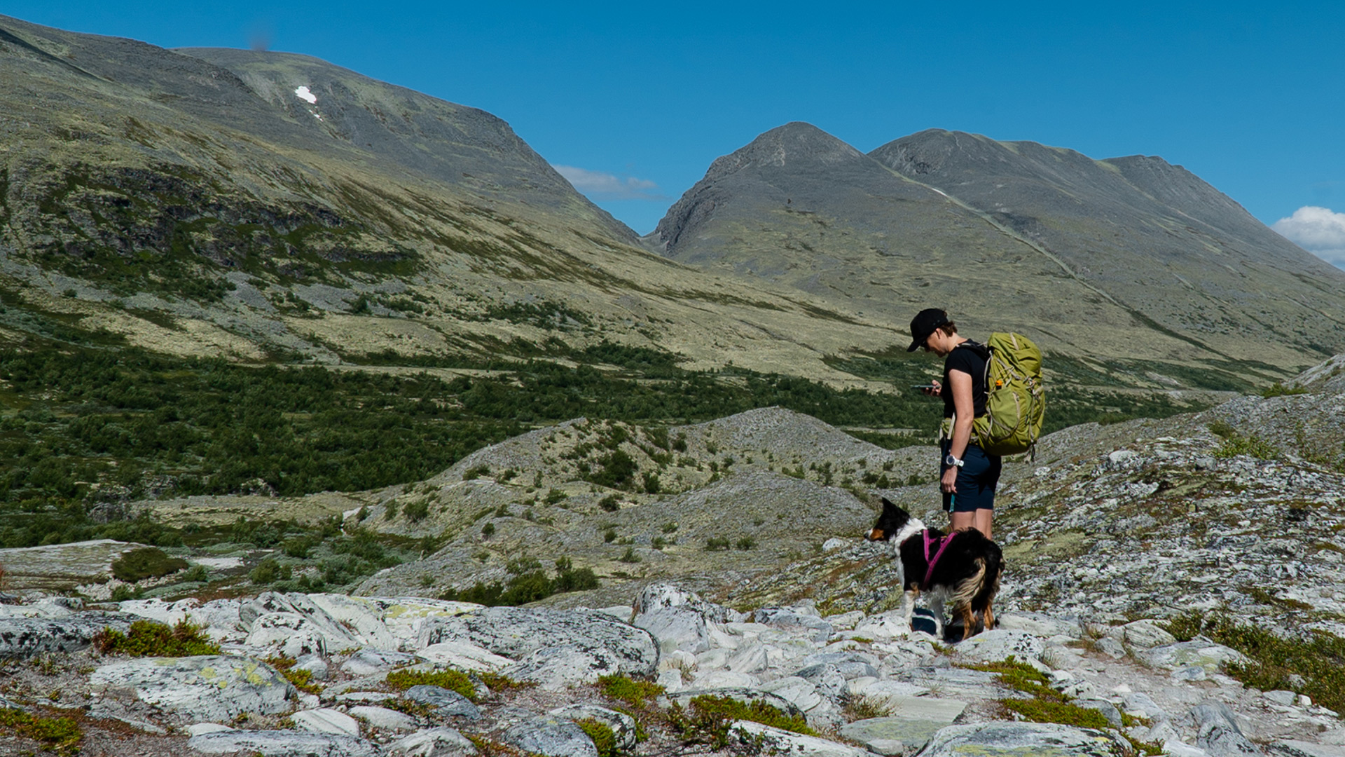 Person and dog hiking.